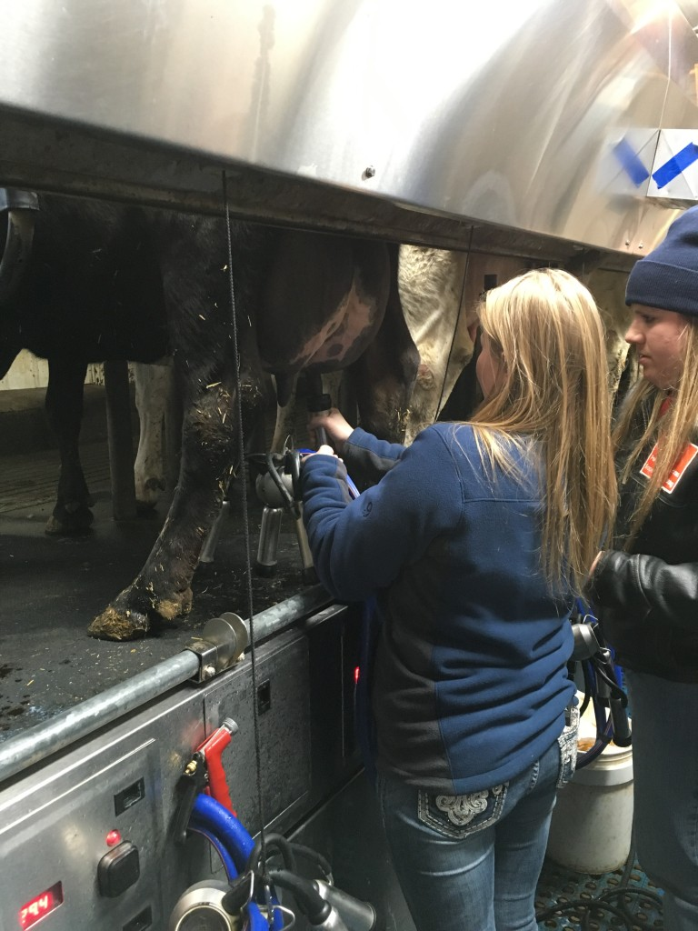 Students visiting for Midwest Regional Rally get some hands-on experience of the dairy state's namesake industry.